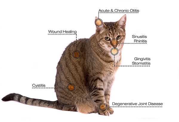 Cat_diagram_Reduced